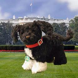 First Dog ou OBAMA Dog